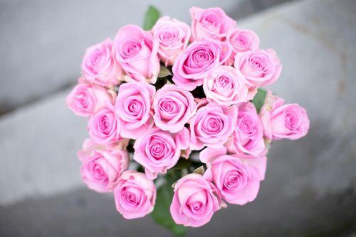带刺de玫瑰