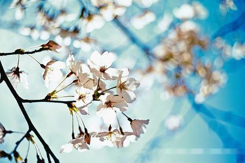 桃花树下三年坛 提壶可见梦中人111